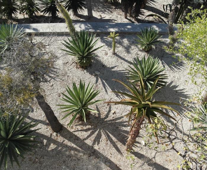 Jardin de cactus Hotel Ambola